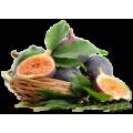 Саженцы Инжира