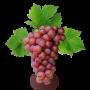Саженцы Винограда (41)