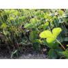 Как сохранить урожай в дождливое и холодное лето