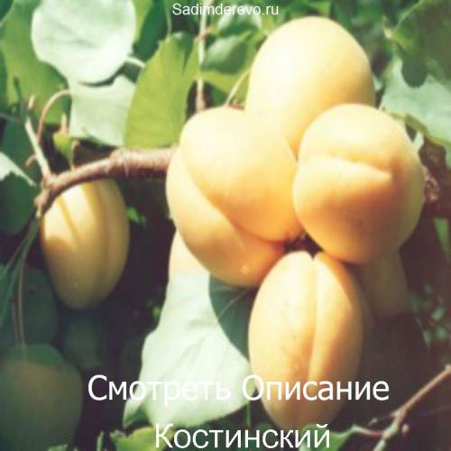 Саженцы Абрикоса сорта Костинский