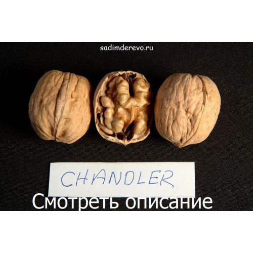 Саженцы Грецкого Ореха Chandler