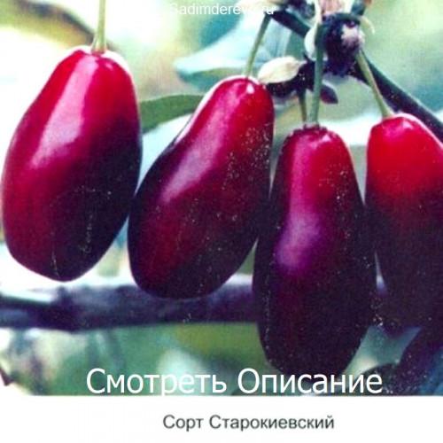 Саженцы Кизила сорта Старокиевский