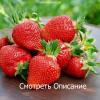 Чем подкормить клубнику весной, чтобы увеличить урожай в два раза