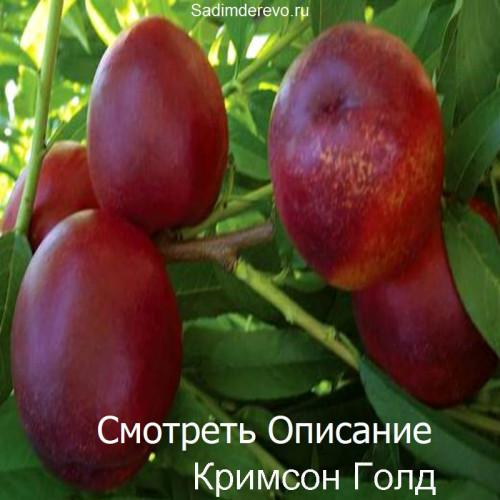 Саженцы Нектарина сорта Кримсон Голд