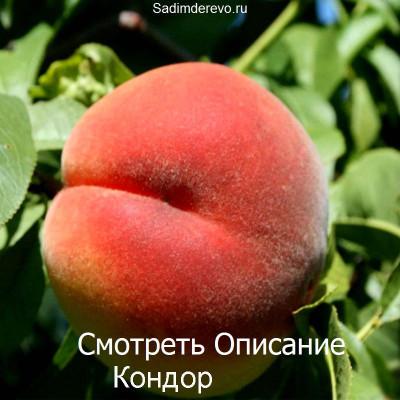 Персик Кондор