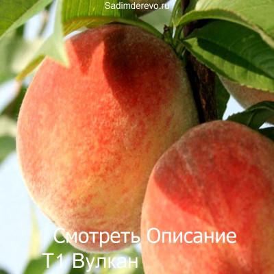 Персик Т1 Вулкан