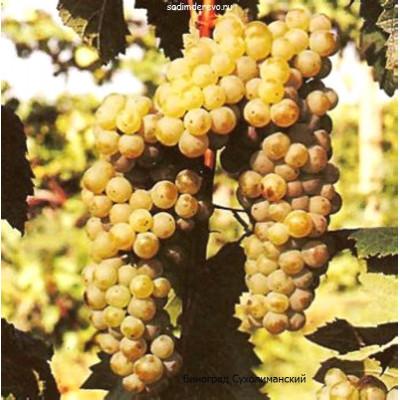 Виноград Сухолиманский