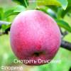 Весенняя подкормка и удобрение яблонь