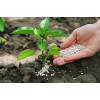 Что такое кислотность почвы и как ее определить