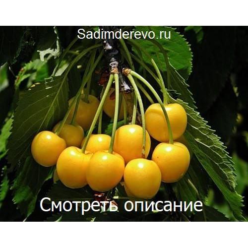 Саженцы Черешни Дрогана Желтая - фото и описание