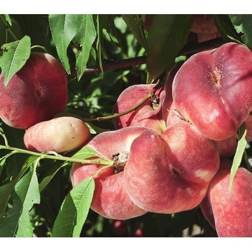 Саженцы Персика УФО-5 - отзывы и описание