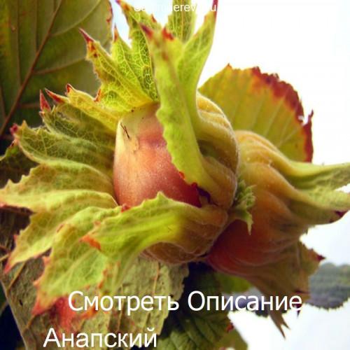 Саженцы Фундука Анапский - фото и описание