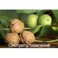 Статьи про орехи