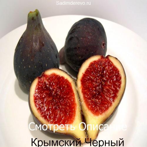 Саженцы Инжира Крымский Черный - отзывы и описание