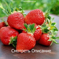 Статьи про клубнику