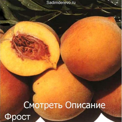Саженцы Персика Фрост - фото и описание