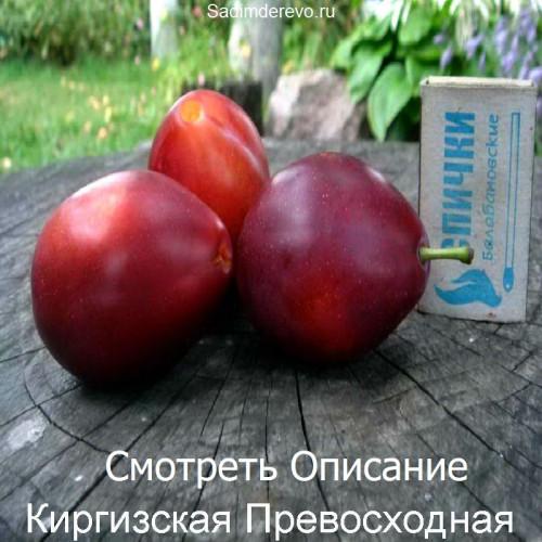 Саженцы Сливы Киргизская Превосходная - фото и описание