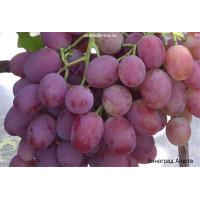 Статьи про виноград.