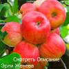 Чем хороши колоновидные яблони